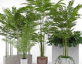 3D House plant 3