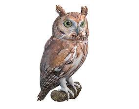 Screech Owl 3D asset