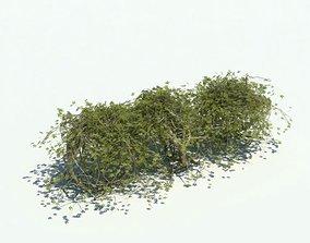3D model Green Short Hedge