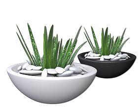 3D model Aloe Vera - Potted Plant 2