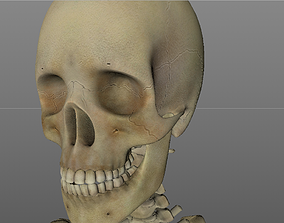 game-ready Human Skeleton Caucasian Male Low-poly 3D model