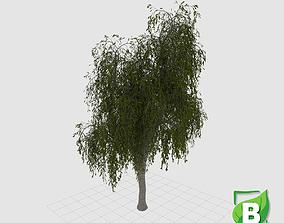 Weeping Paperbark - Melaleuca Leucadendra 3D asset