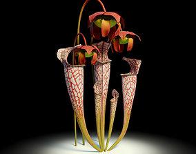 Sarracenia 3D asset