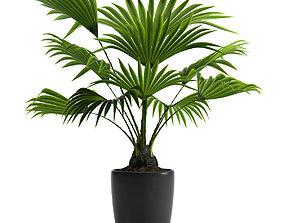 3D model PLANT FAN PALM
