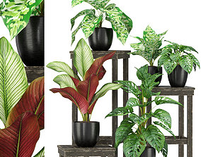 3D Plants collection 351