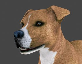 3D model MPIT-015 Animated Dog