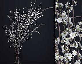 Prunus White Blossom plant 3D