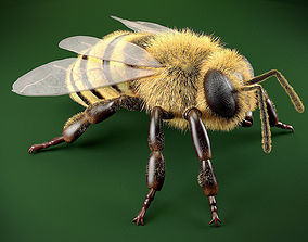 low-poly Bee 3DSMax