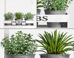 Decorative plant set-14 3D