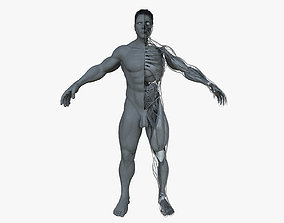 Ultimate Male Anatomy Project 3D model