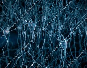 Pyramidal-Neurons-scene 3D model