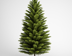 CGAxis Norway Spruce 21 3D model