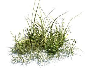 3D model Tall Green Grass