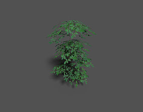 low poly forest tree 3D asset