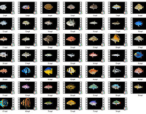 Game Ready Pack 1 - Low poly Rif Fish Collection 3D asset