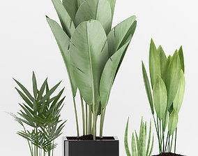 Plants 76 3D