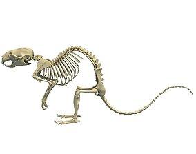 3D Rat Skeleton