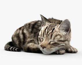 3D model Sleeping Cat HD