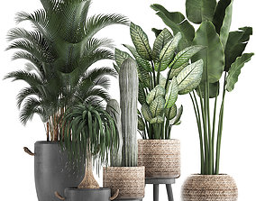 3D model Collection of exotic palm trees in concrete 1