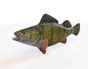 3D model Yellow Perch Fish