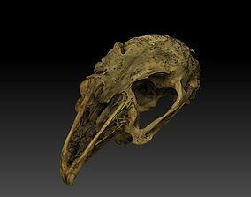 Rabbit Skull Scan 3D model 3dprint