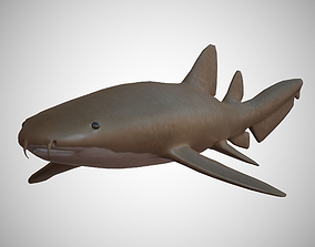 Nurse Shark 3D asset