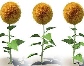 Sunflower 3D