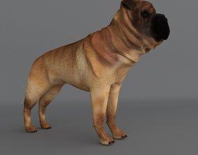 Ori Pei Dog 3D