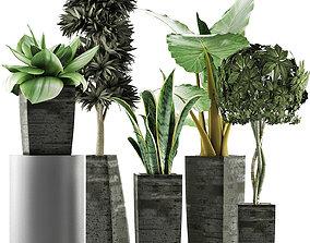 Plants Collection 38 3D model