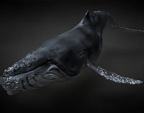3D Humpback Whale C4D Rigged