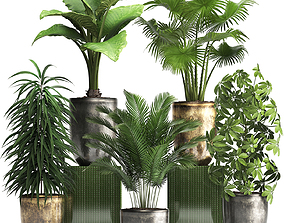Collection Exotic plants 354 3D