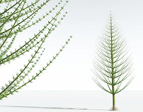 EVERYPlant Spiral Horsetail Tree 10 --12 Models--