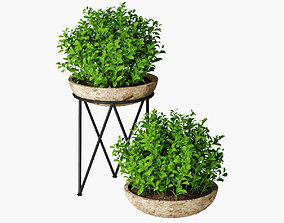 3D small plant 04