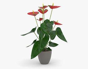 Anthurium Andraeanum 3D model