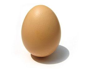 bird 3D egg