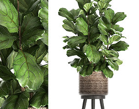 3D model Ficus lyrata tree in rattan basket for the 1