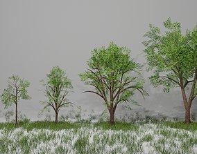 Trees 3D asset VR / AR ready