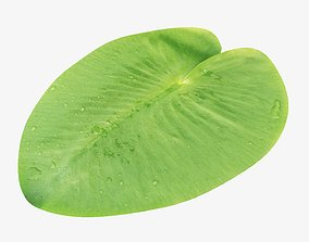 3D Water lily leaf