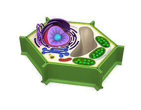 3D model biology Plant Cell