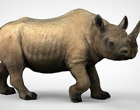 3D model White rhinoceros