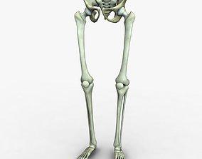 3D model Human Leg and Pelvis Bones