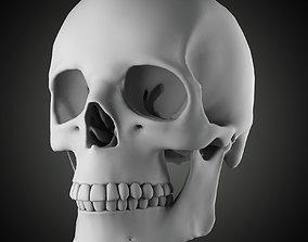 Free Skull Teeth and Jaw 3D Base Mesh
