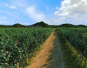 3D vineyard