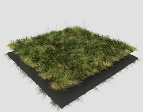 3D model Bloodwort Dense Meadow Patch