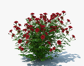 3D Rose Bush