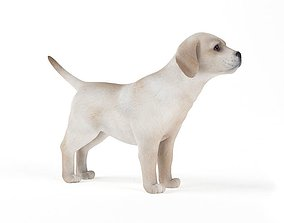 3D White Puppy Paying Attention