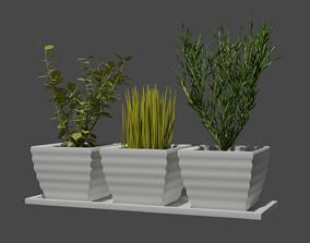 3D Herbs