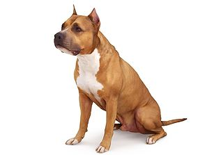 3D model Staffordshire Terrier Dog