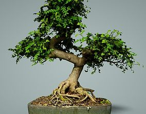 Bonsai Tree 3D asset realtime