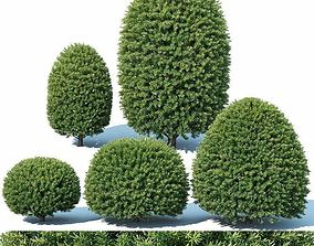 Taxus Baccata Nr5 - topiary set 1 3D model